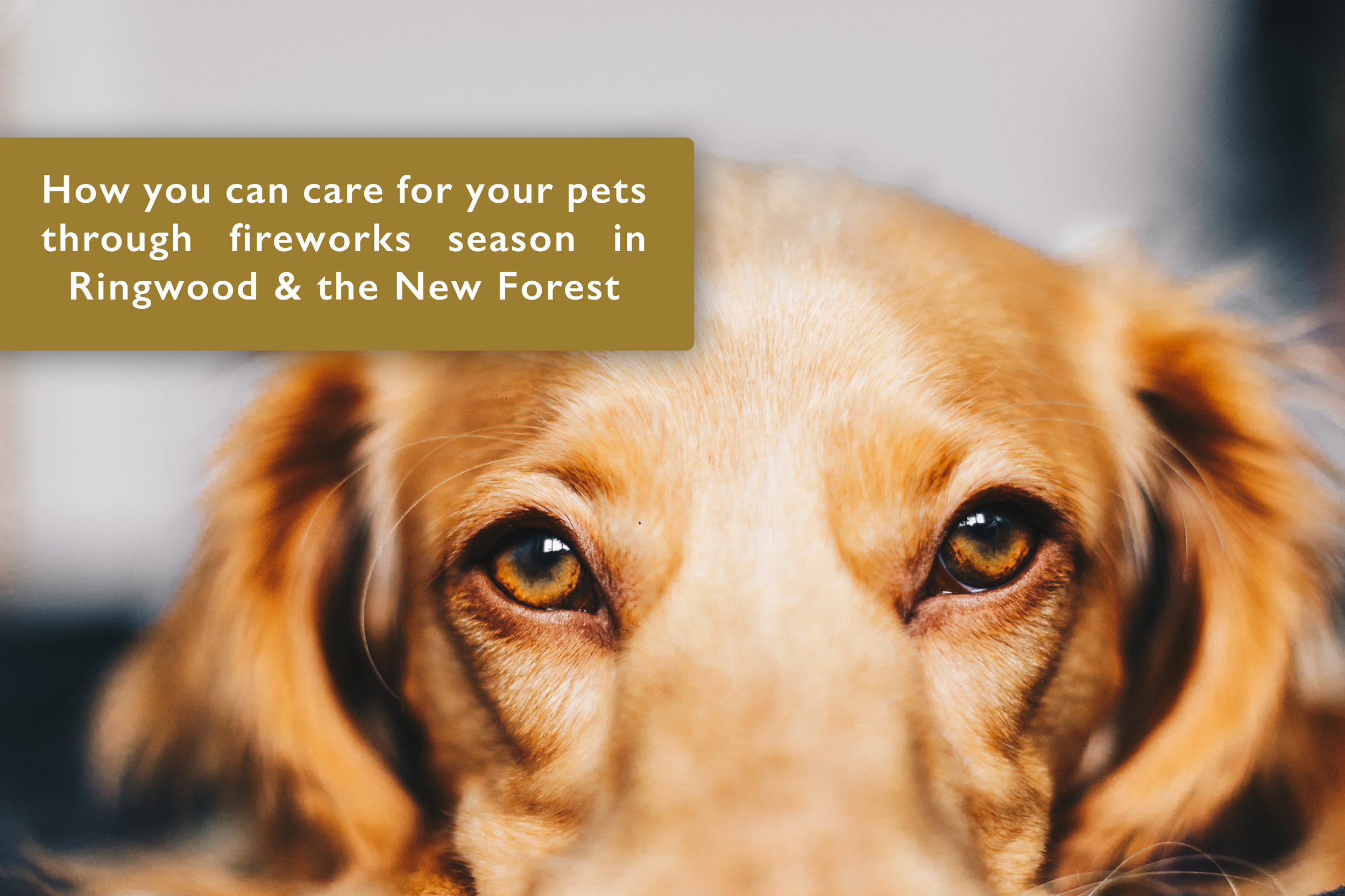 How you can care for your pets through fireworks season in Ringwood & the New Forest